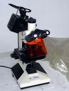 Fluorescence, Trinocular Microscope